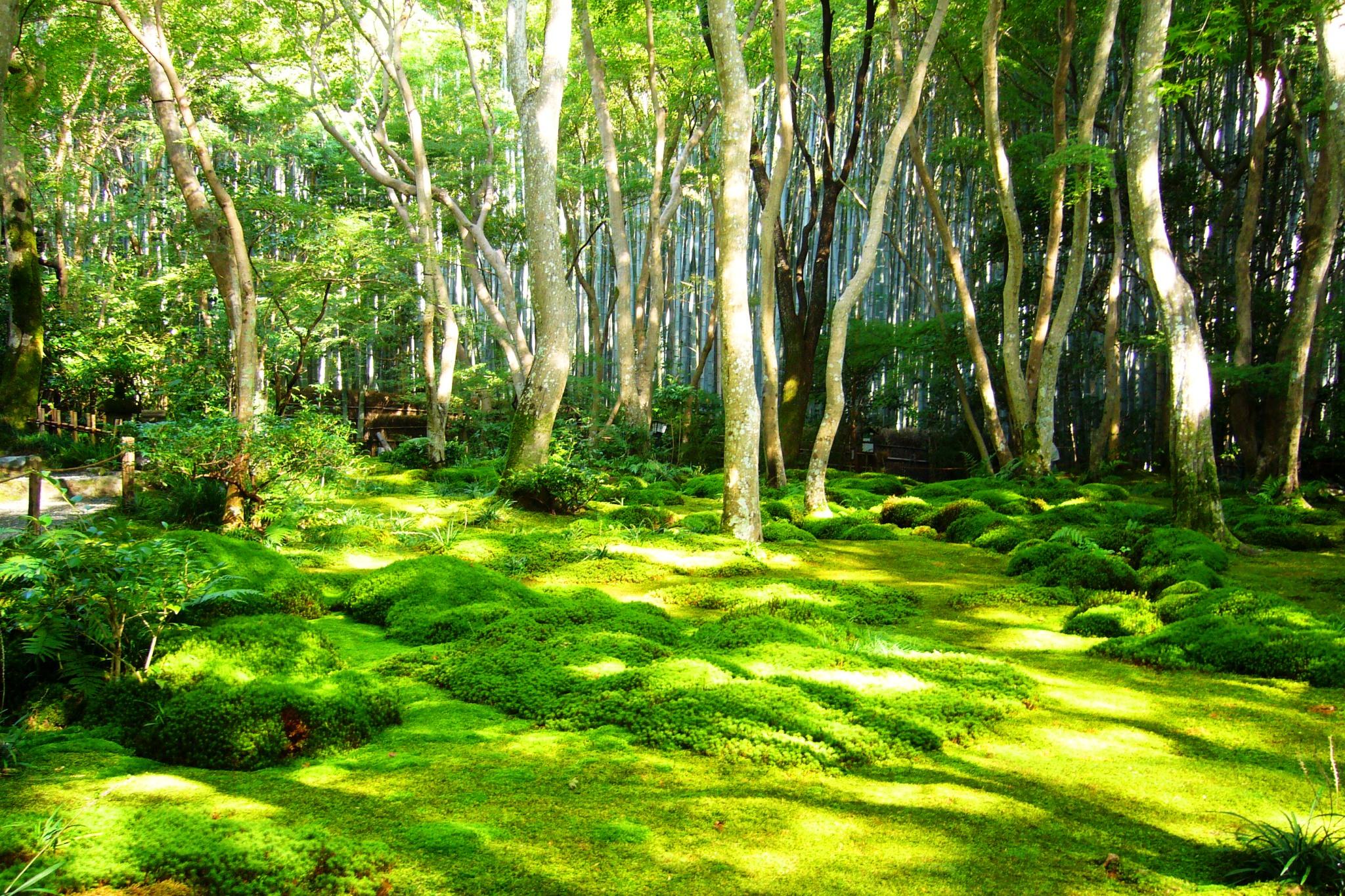 Gio-ji, Moss Garden