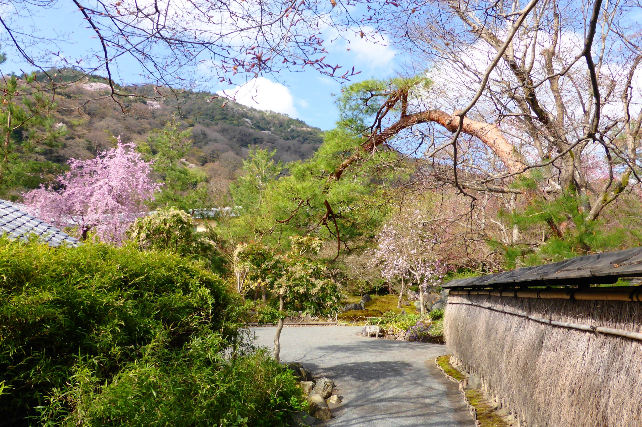 Hogon-in, Shishiku-no-niwa (Garden)