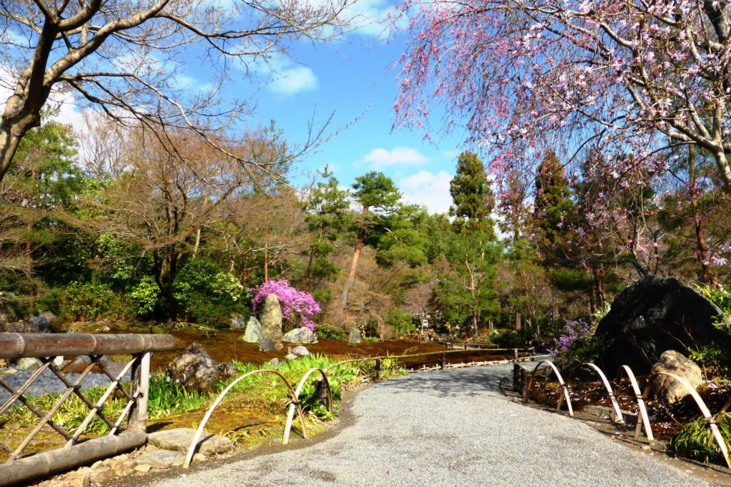 Hogon-in, Shishiku-no-niwa (Garden) (Cherry blossoms)