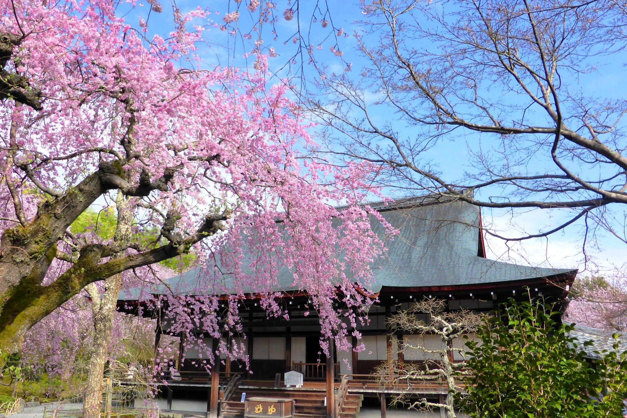 Tenryu-ji, Tahoden (Hall of Many Treasures)