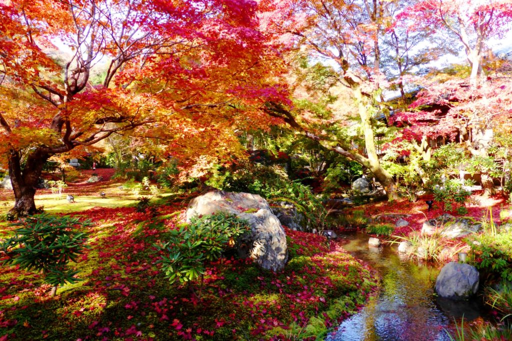 Hogon-in, Shishiku-no-niwa (Garden) (Autumn leaves)