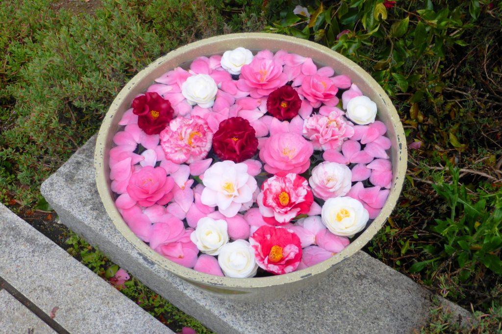 Reikan-ji, Camellia