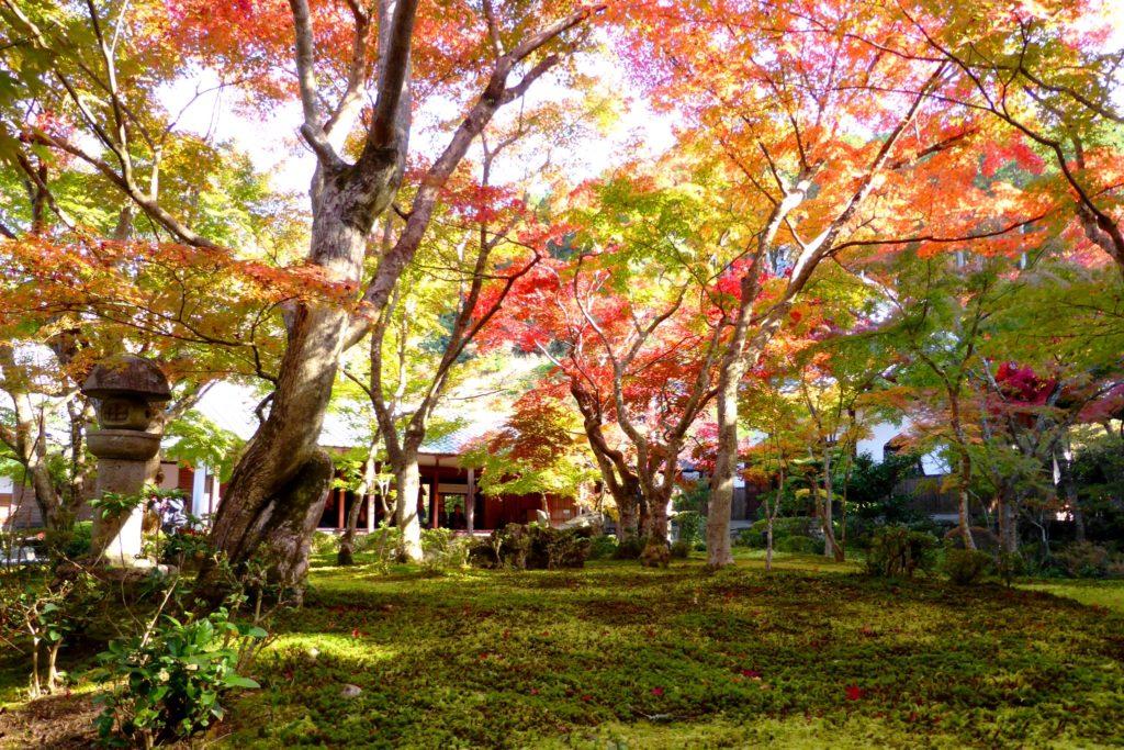 Enko-ji, Autumn leaves in Jugyu-no-niwa (Moss garden)