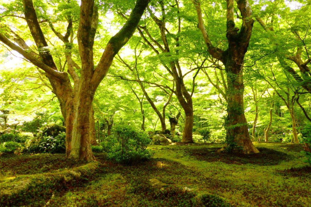 Enko-ji, Jugyu-no-niwa (Moss garden)