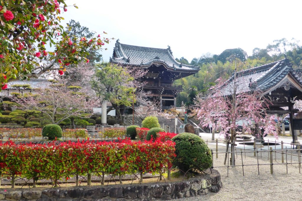 Kokawa-dera, Chumon (Gate) and Cherry blossoms