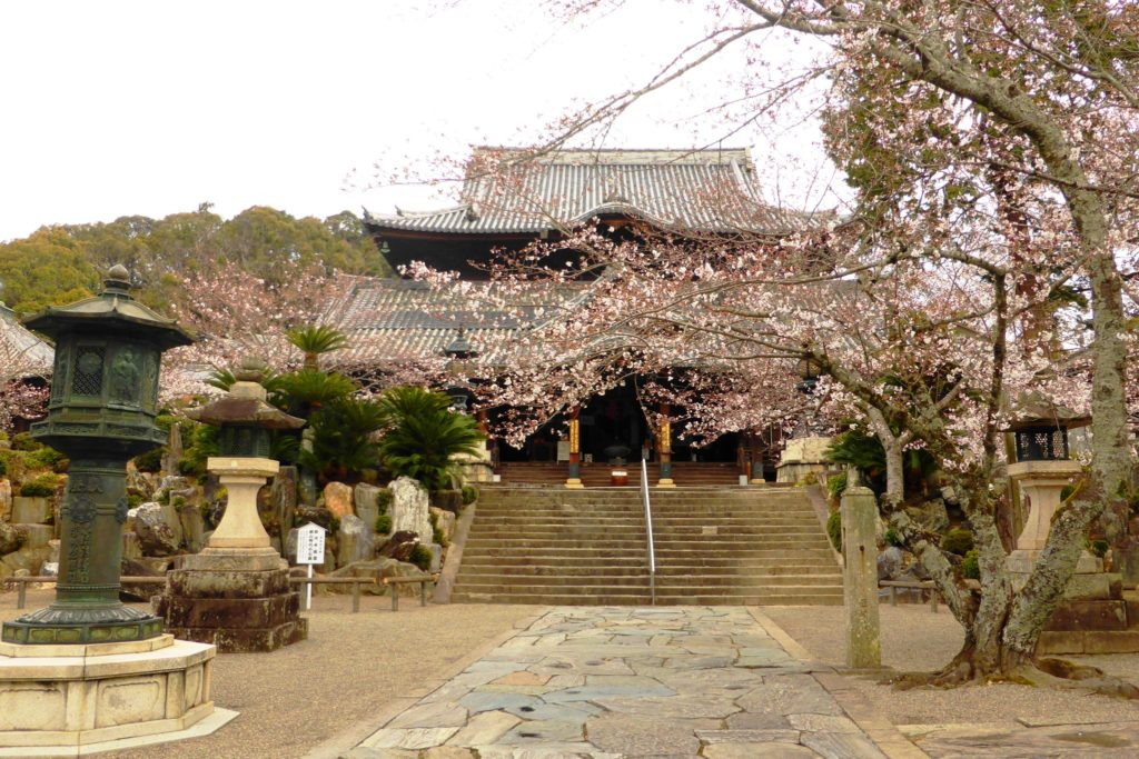 Kokawa-dera, Hondo (Main Hall) and Cherry blossoms