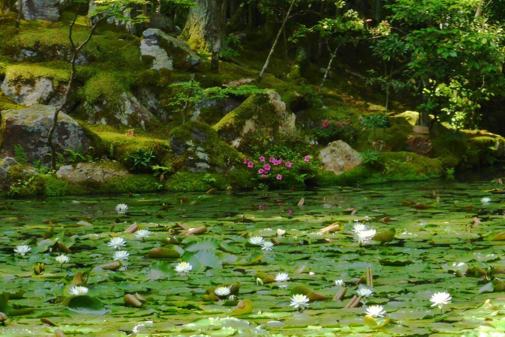 Tenju-an, Water lilies in Garden